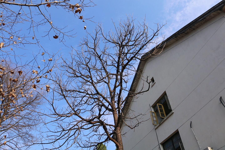 樹與老房子